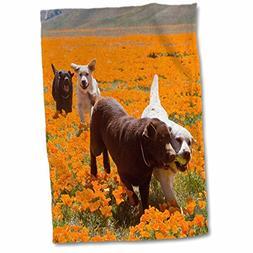 3dRose 3D Rose Four Labrador Retriever Dogs-California-Us05