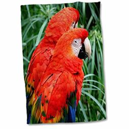3D Rose Two Large Colorful Scarlet Macaws Or Parrot. Hand To