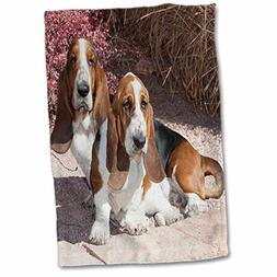 3D Rose Two Purebred Bassett Hound Dogs Near Red Bush-Na02 P
