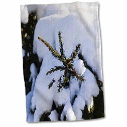 3dRose Alexis Photography - Seasons Winter - Spruce tree und