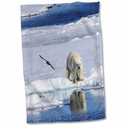 3dRose Danita Delimont - Bears - Norway, Svalbard. Polar Bea