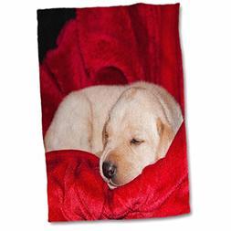3dRose Danita Delimont - Dogs - A Yellow Labrador Retriever