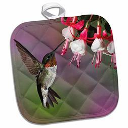 3dRose Male Ruby Throated Hummingbird, Kentucky-Na02 Aje0270