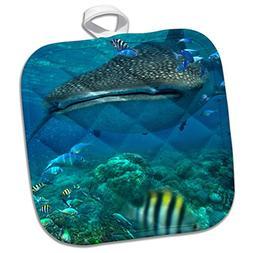 3dRose Whale Shark, Rhincodon Typus, Over Coral Reef, Cebu,
